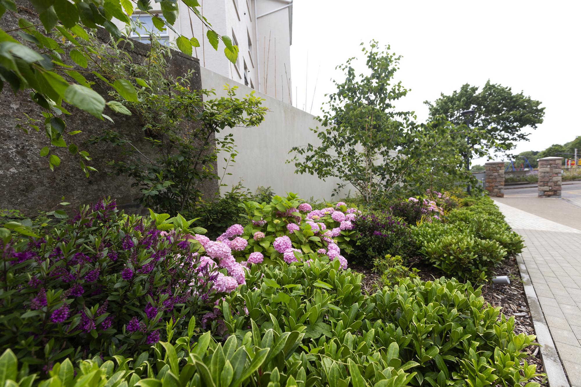 WESTMOUNT QUARRY LANDSCAPE | St. Helier, Jersey | Axis Mason