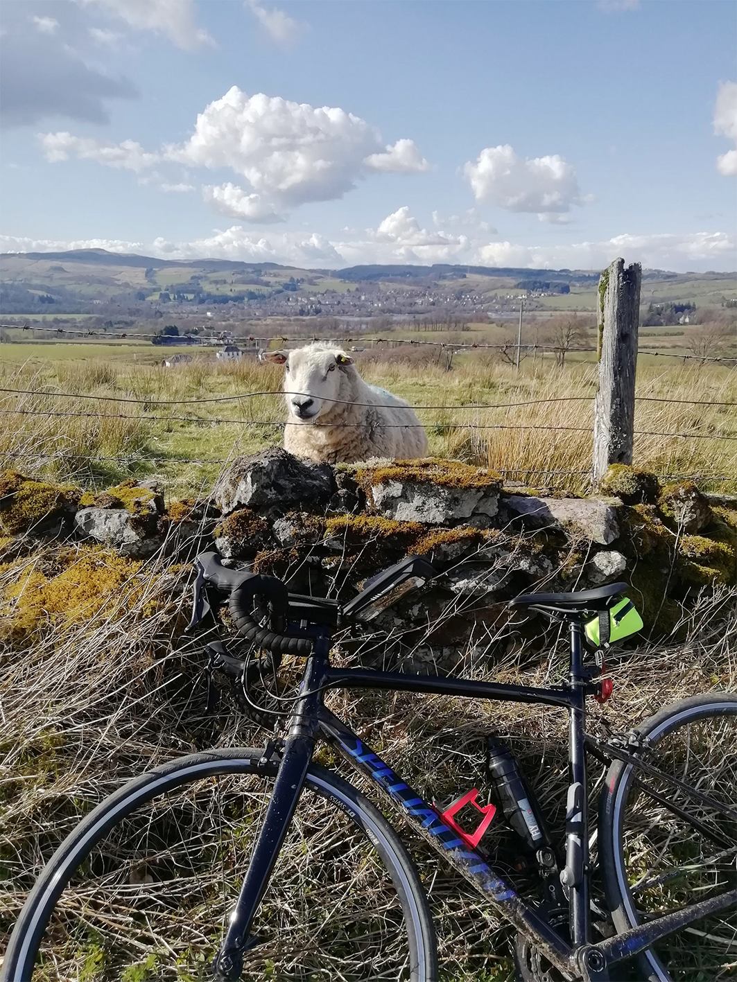 sheep and bike